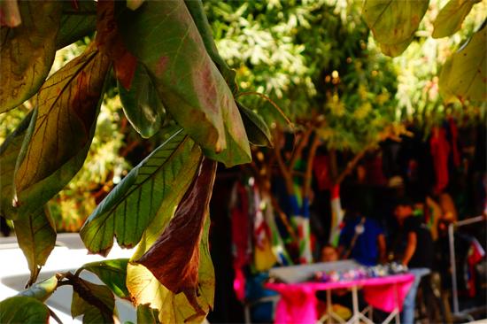 Carnaval de Barranquilla (6)